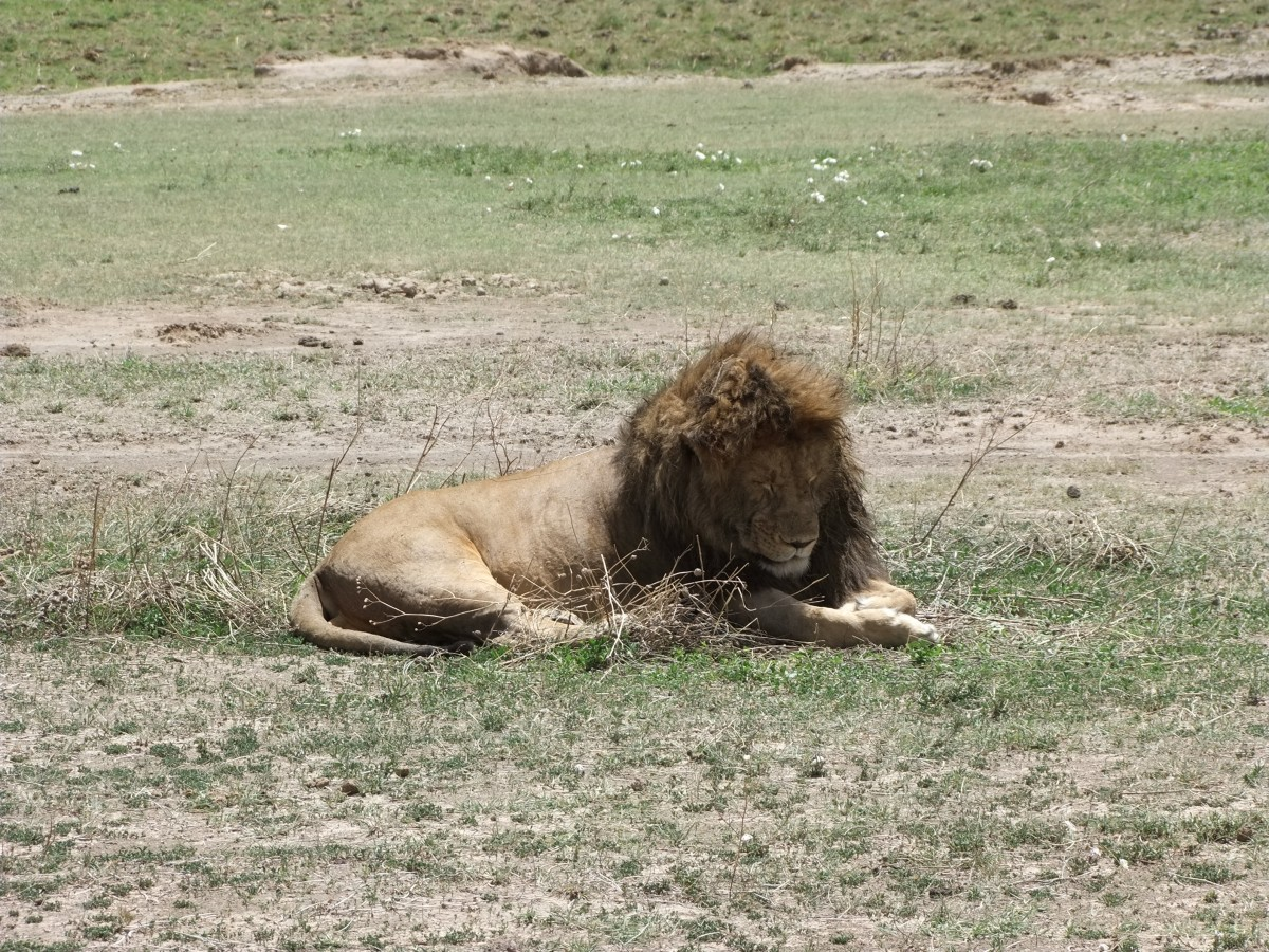 Zdjęcia: Park Ngorongoro, Afryka Środkowa, Safari w Parku Ngorongoro, TANZANIA