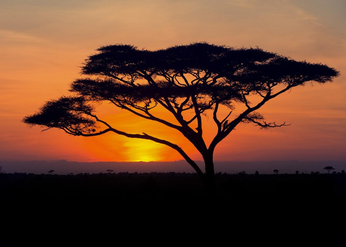 Zdjęcia: Serengeti, Serengeti, Wschód słonka w Serengeti, TANZANIA