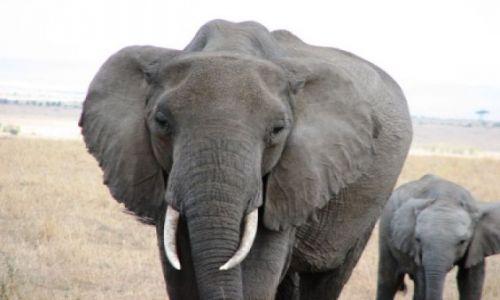 TANZANIA / brak / Serengeti / dokąd teraz tato???