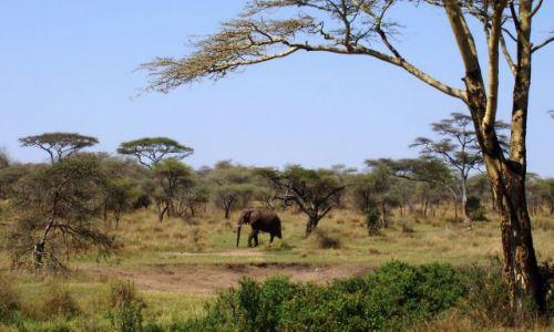 TANZANIA / Serengeti / Serengeti / Wędrówka przez sawannę