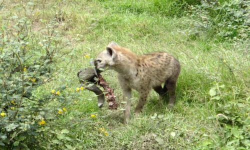 Zdjecie TANZANIA / Afryka / PN Ngorongoro / Podwieczorek :)