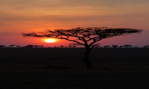 TANZANIA / Serengeti / Serengeti / KONKURS Serengeti