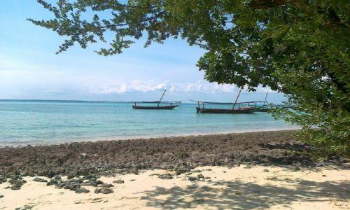 Zdjecie TANZANIA / Zanzibar / Bwejuu / KONKURS. Sielsko na Zanzi