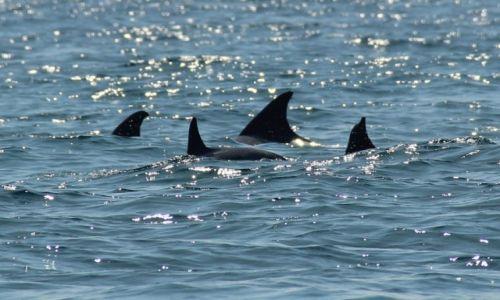 TANZANIA / Zanzibar / Zanzibar / Delfinki.... czy rekinki :)