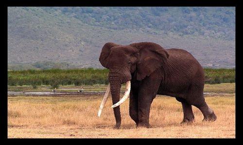 Zdjęcie TANZANIA / północna Tanzania / krater Ngorongoro / Aaale nuda....
