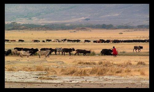 Zdjecie TANZANIA / północna Tanzania / krater Ngorongoro / Życie Masajów w