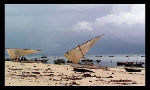 Zdjecie TANZANIA / Zanzibar / Nungwi / W u�pieniu...