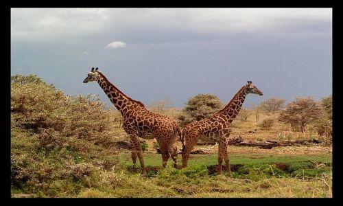 TANZANIA / północna Tanzania / P.N. Lake Manyara / Po małżeńskiej kłótni... ;o)