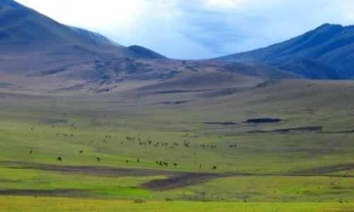 Zdjęcie TANZANIA / - / Moshi / W drodze do Serengeti