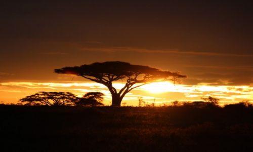 Zdjecie TANZANIA / Park Narodowy Serengeti / Park Narodowy Serengeti / o wschodzie slonca