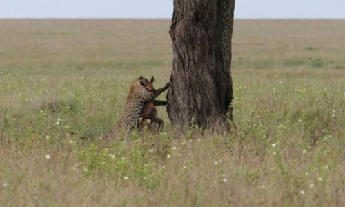 Zdjecie TANZANIA / Park Narodowy Serengeti / Park Narodowy Serengeti / Czas na śniadanie