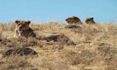 Zdjecie TANZANIA / Arusha / Kaldera Ngorongoro / Rodzina na swoim...Ngorongoro