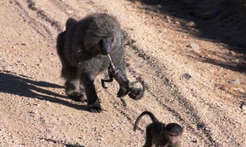 Zdjecie TANZANIA / Arusha / Serengeti / Sila uczuc...