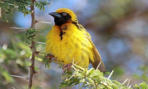Zdjęcie TANZANIA / Arusha National Park / Arusha National Park / Wikłacz
