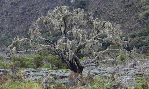 Zdjęcie TANZANIA / Arusha National Park / Arusha National Park / Drzewo