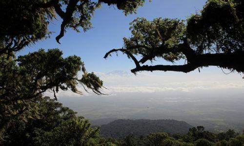 Zdjęcie TANZANIA / Arusha National Park / Arusha National Park / Kilimanjaro pomiędzy drzewami