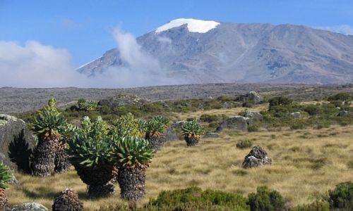 Zdjęcie TANZANIA / . / masyw Kilimandżaro / w drodze na szczyt