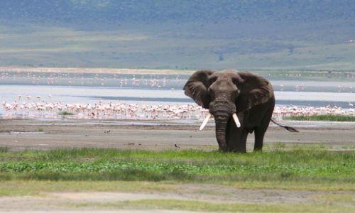TANZANIA / Ngorongoro / Ngorongoro / Nad Magadi Lake