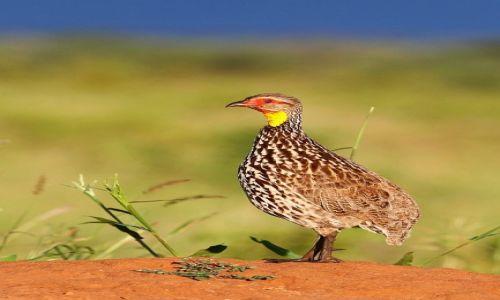 Zdjecie TANZANIA / Tarangire / Tarangire National Park / W porannym słońcu