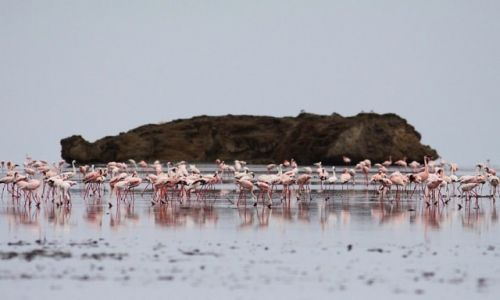 TANZANIA / Lake Natron / Lake Natron / Crimson wings