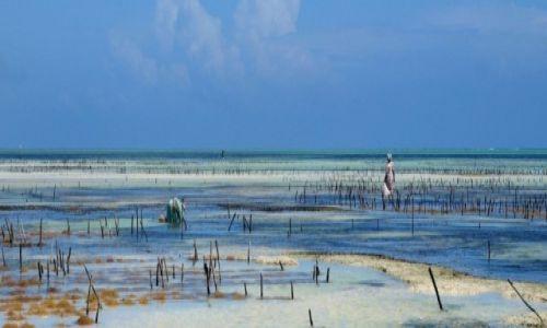 Zdjecie TANZANIA / Jambiani / Zanzibar / Zanzibar - Jambiani