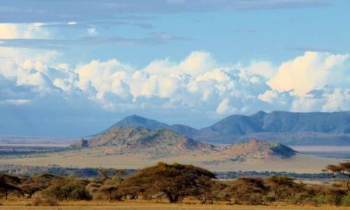 Zdjęcie TANZANIA / - / Park Serengeti / Serengeti