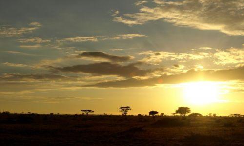 Zdjęcie TANZANIA / - / Park Serengeti / Wschód