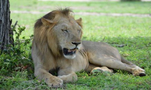 Zdjecie TANZANIA / Selous Game Reserve / Selous Game Reserve / Leniuszek
