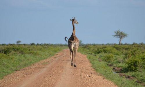 Zdjecie TANZANIA / Selous Game Reserve / Selous Game Reserve / Bez pośpiechu
