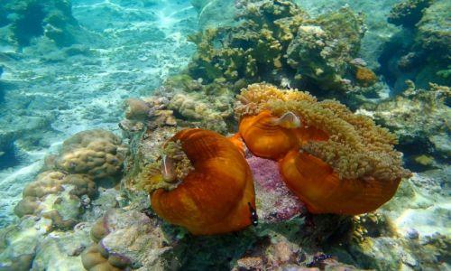 Zdjecie TANZANIA / Zanzibar / Jambiani / Podwodny świat