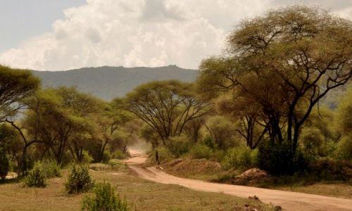 Zdjęcie TANZANIA / Arusha / Arusha / Na safari