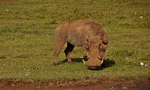Zdjęcie TANZANIA / Arusha / W Parku Arusha /