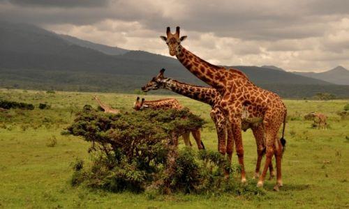 Zdjęcie TANZANIA / Arusha / W Parku Arusha / Śniadanko