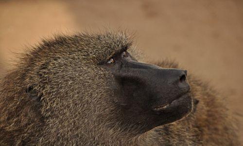 Zdjecie TANZANIA / Krater Ngorongoro / Krater Ngorongoro / Marzyciel