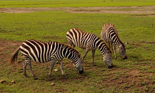 Zdjęcie TANZANIA / Krater Ngorongoro / Krater Ngorongoro / Ale wypas!