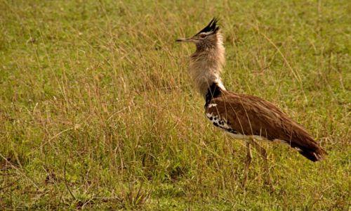 Zdjęcie TANZANIA / Park Arusha / Park Arusha / Drop olbrzymi