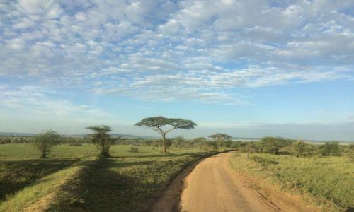 Zdjecie TANZANIA / Serengeti NP / Serengeti / Poranek w Serengeti