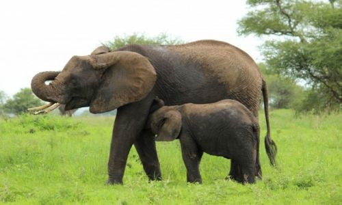 Zdjecie TANZANIA / Tanzania / Tanzania / Matka i dziecko