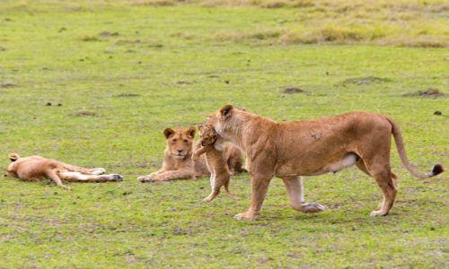 Zdjęcie TANZANIA / Park Serengeti / Park Serengeti / Troskliwa mama