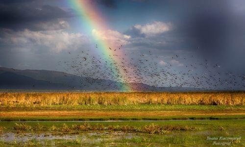 Zdjecie TANZANIA / Park Lake Manyara / Lake Manyara / Lake Manyara