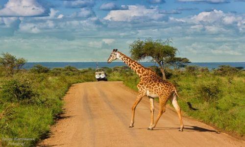 Zdjęcie TANZANIA / Park Serengeti / Park Serengeti / No i kto ma pierwszeństwo...??