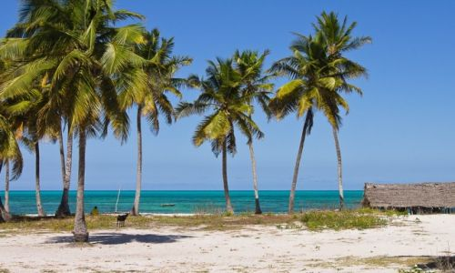 TANZANIA / Zanzibar / Jambiani / Nad oceanem