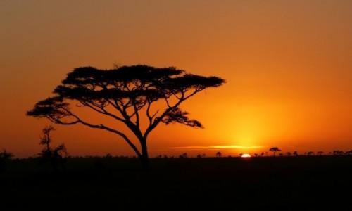 Zdjęcie TANZANIA / Polnocna Tanzania / Serengeti / Pozegnanie z safari