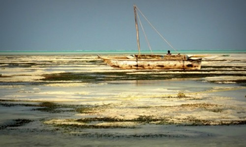 TANZANIA / Zanzibar / Jambiani / Odpływ