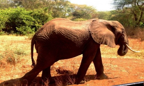 Zdjecie TANZANIA / Tanzania / Tanzania / Kili33