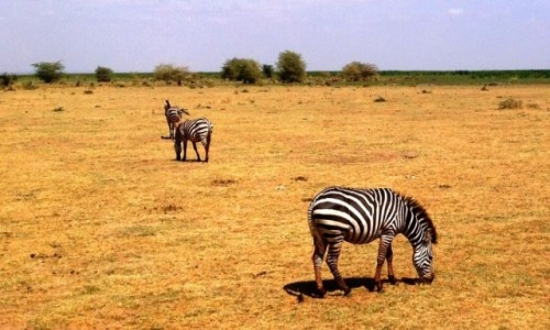 Zdjecie TANZANIA / Tanzania / Tanzania / Kili34