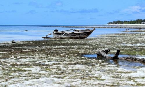 Zdjecie TANZANIA / Zanzibar / Paje / odpływ