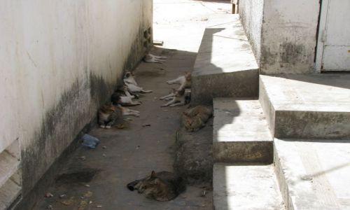 Zdjęcie TANZANIA / Afryka, Zanzibar / Stone Town / Ulica kotów