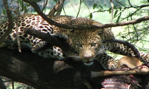 Zdjecie TANZANIA / Afryka / Manyara Lake / Zaniepokojenie