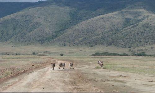 Zdjęcie TANZANIA / Afryka, / Ngorongoro / Poszły sobie
